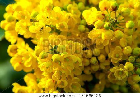 Yellow Blossoming Flowers