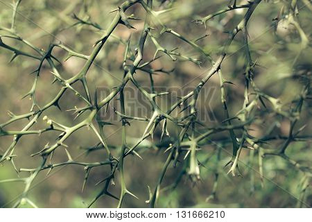 Thorns On Bare Twigs