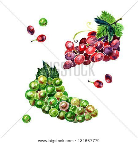 Watercolor brush of green and red grapes on white background