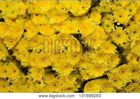 Beautiful yellow chrysanthemums flowers arrange for sell