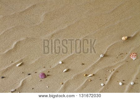 Sea shells on sand. Summer beach background, Top view