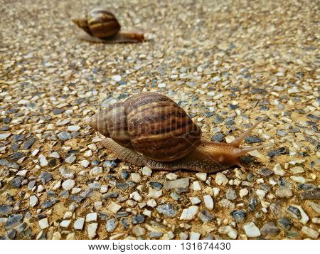 two snails crawling slowly on the rocky floor