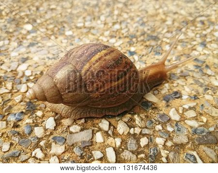 snail crawling slowly on the rocky floor