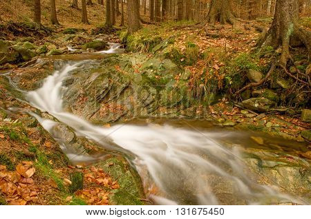 Mountain stream flowing slowly between the trees.
