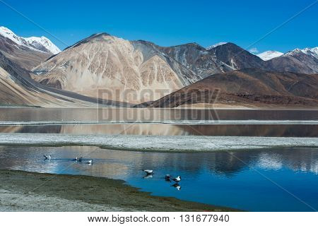 Pangong lake in Ladakh, India. It is famous spot near Tibet  in Ladakh.