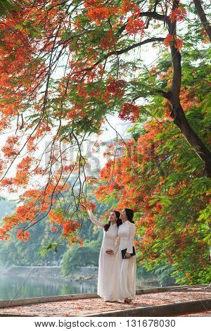 Vietnamese girls wear Ao dai near blooming flamboyant flowers