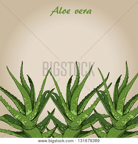 Vector hand drawn botanical Aloe Vera, sketch