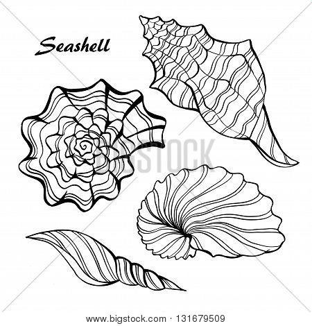 Seashell  vector set. Hand drawn  on white background.