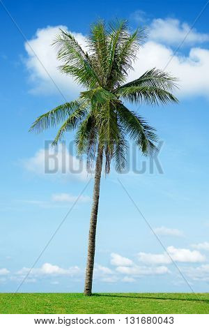 Coconut Palm Tree And Cloudy Blue Sky In Thailand