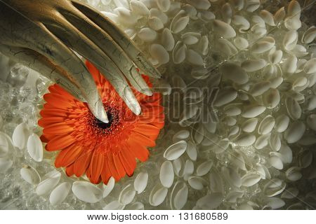 BEAUTIFUL ABSTRACT ROMANTIC TOP VIEW IMAGE OF A HAND HOLDING AN ORANGE DAISY FLOWER , ON A SEA SHELL BACKGROUND , BEAUTIFUL PASTEL COLORS