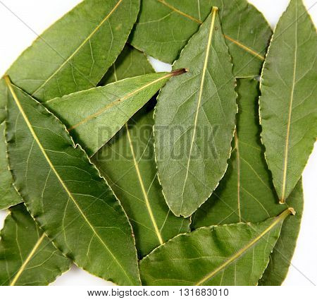 Bay leafs or laurel leafs on white background