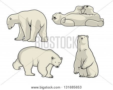 White Polar bear icons - vector illustration for you.