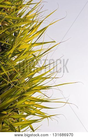half palm leaves half sky composition with copy space for your travel text