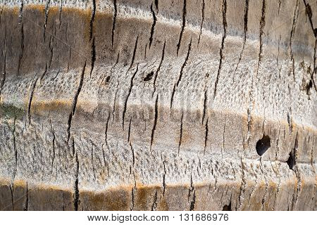 macro of coconut tree trunk texture background
