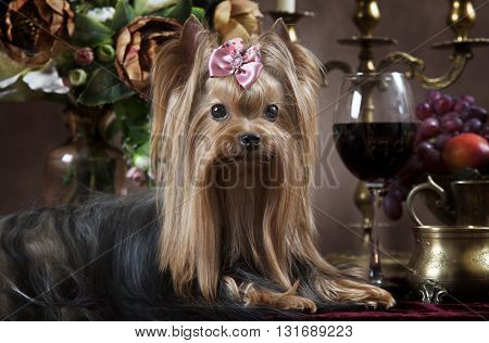 Portrait of Yorkshire terrier with fruit flowers candles and wine in classical Dutch style