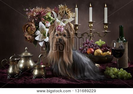 Yorkshire terrier dog with fruit flowers candles and wine in classical Dutch style