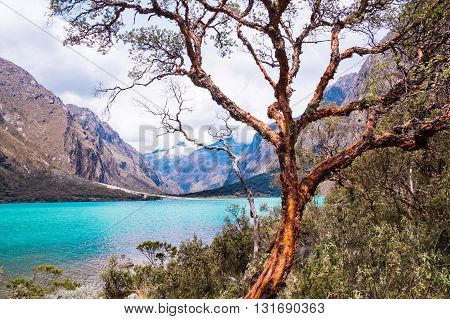 Llanganuco lake: An orange-brown tree trunk at a blue glacier lagoon in the Peruvian Andes. Huaraz and the cordillera blanca is a popular tourist destination for alpine hiking.