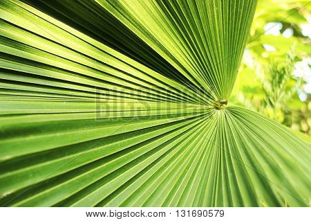 Beautiful green palm leaf close-up growing outdoors. Soft and blur conception