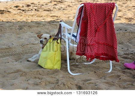 the hostess went to bathe in the sea, the dog guards the things