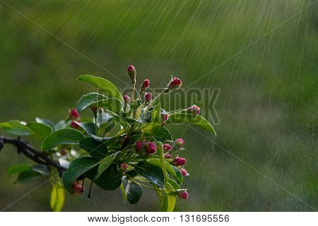 flowers on a branch in the rain
