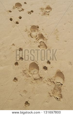 Human and dog footprint on the sand