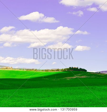 Green Sloping Meadows of Tuscany in the Spring