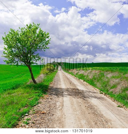 Dirt Road between Green Sloping Meadows of Tuscany