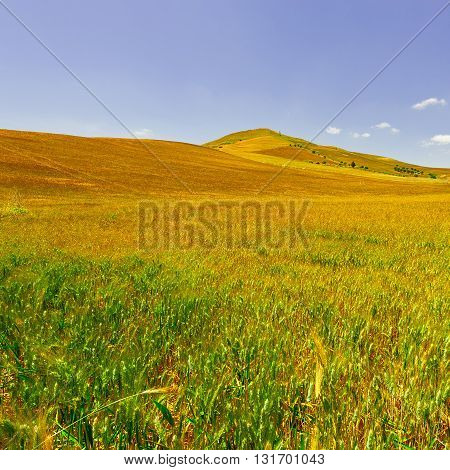 Wheat Fields on the Hills of Sicily