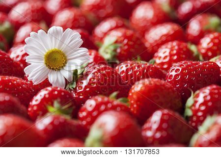 Heap  of fresh strawberries with daisy flower