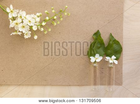 Flowers bird-cherry with blank sheet of old paper. Bird-cherry flowers in small bottles. Photo for label, calendar, posters, wallpapers, mock-ups. Vintage cardboard.