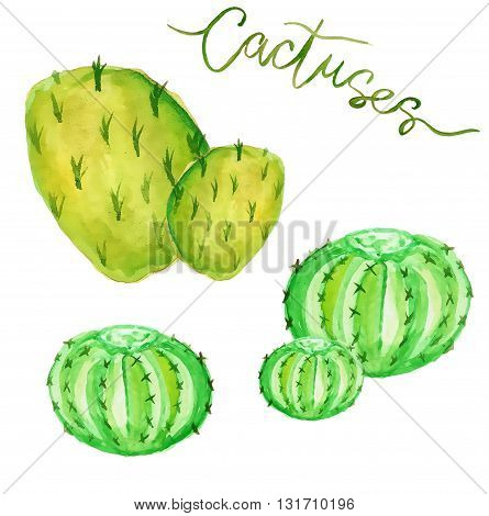 Watercolor cactus, hand-drawned cactus isolated over white