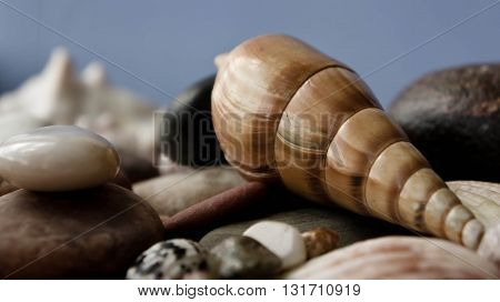 the big cockleshell, is a lot of sea cockleshells, a gray-blue background, cockleshells of various forms and shades