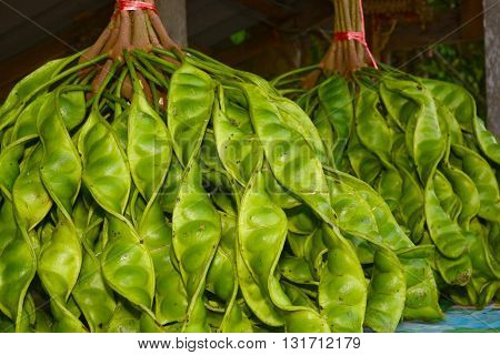 Fresh bunch of Parkia speciosa or green beans stink beans stink bitter beans twisted cluster beans Sato seeds in market Sato seeds Twisted cluster bean vegetables.