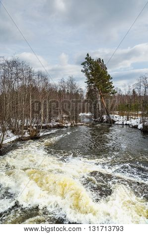 Landscape. The spring flood. The rapid flow of water on the rapids in a wooded area