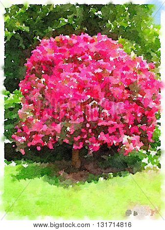 A digital watercolor of a whole fuchsia pink magnolia tree in a park.