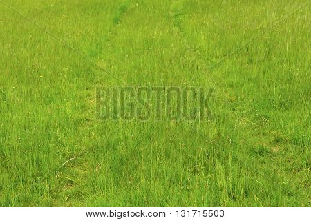Summer landscape with green grass road in mountains