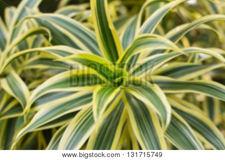 Blurred nature background (Texture of a green and yellow leaf as background)