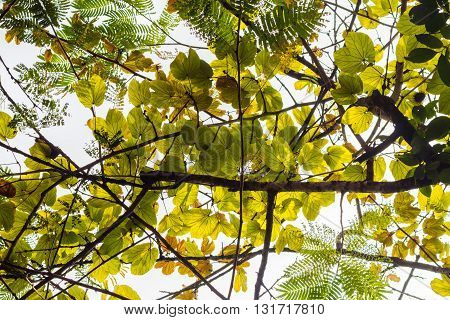 Blurred nature background (Looking Up Through Forest Canopy)