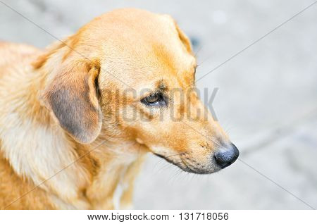 brown street dog on the floor in soft focus