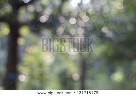 Blurred Nature Background (bokeh Nature Background)