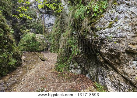 Stream flowing through a canyon with lush vegetation