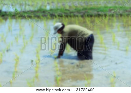 Blurred nature background (Farmers - the farming of Thailand started already in the field, filled with lush rice farmers with rice seedlings)