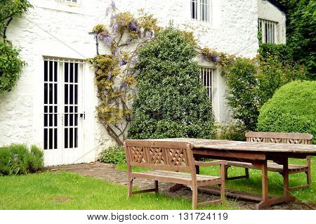 House with some ivy in facade and a vineyard and door and white wooden shutters