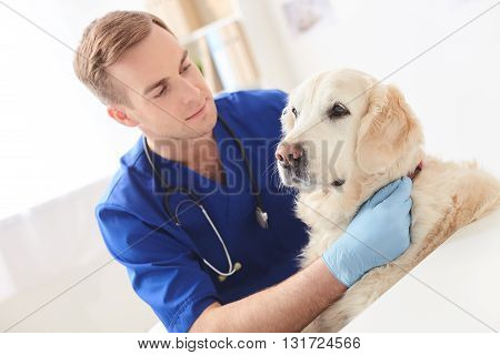 Skillful male vet is doing examination of dog. He is sitting and stroking the animal with joy
