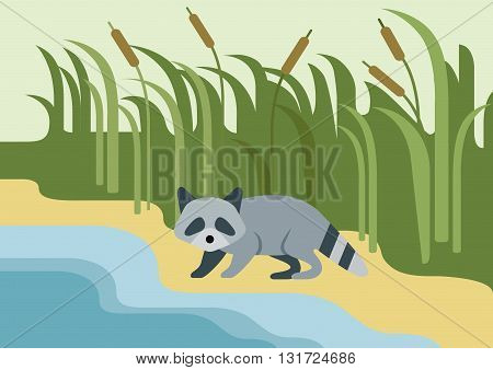 Raccoon flat design cartoon vector wild animal