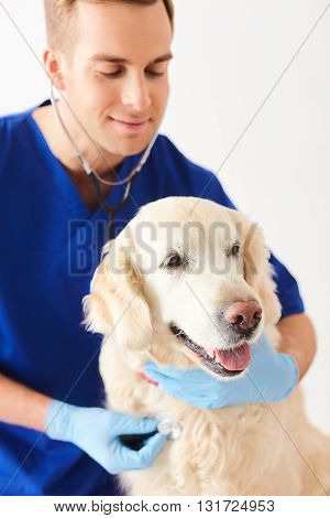 Experienced male veterinarian is touching stethoscope to the dog. He is listening attentively and smiling