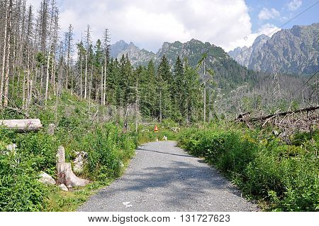 Walking path, mountain High Tatras, Slovakia, Europe