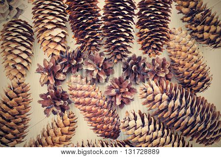 various old cones from a coniferous tree closeup for an abstract natural background in retro style