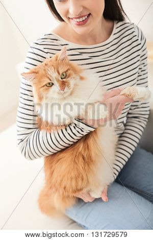Cheerful young woman is relaxing with her cat at home. She is sitting on sofa and holding the animal. The lady is smiling