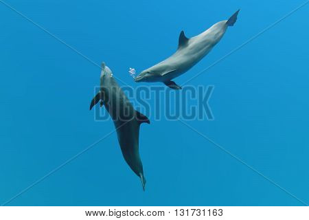 Dolphin In The Blue Fantasy Background Playing